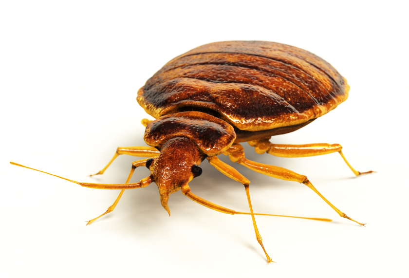 Bed Bug Removal Services U0026 Pro Active Prevention Inspection